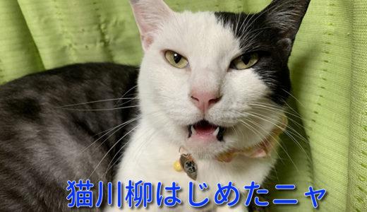 猫川柳シリーズ始めてみました。