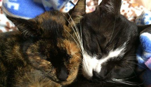 飼い猫を毒餌で失った 毒餌を与えられたら猫はどうなるのか。
