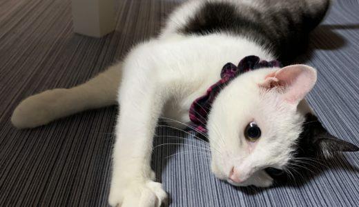 つき、のんびりタイム 猫の私生活