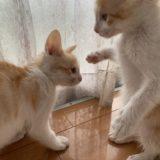 子猫の成長日記3