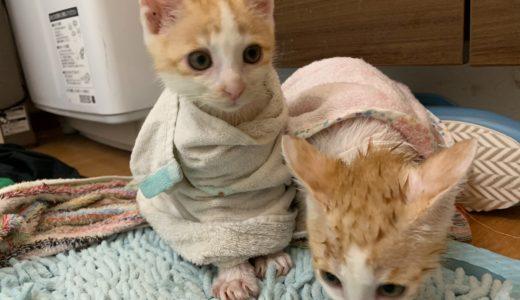 子猫のお風呂