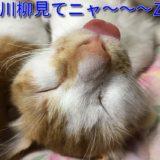 猫川柳シリーズ2