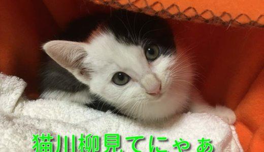 猫川柳シリーズ3