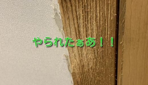 【ねこあるある】 家の柱や壁は爪とぎ用じゃない!