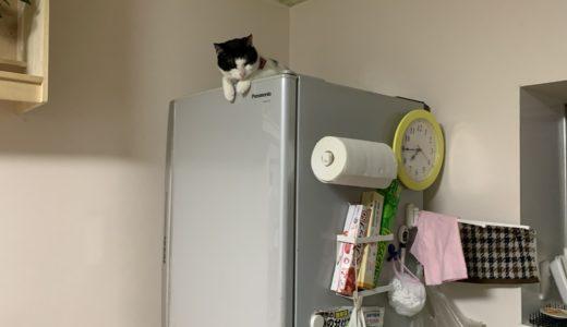 ねこあるある 高い所が好きな猫