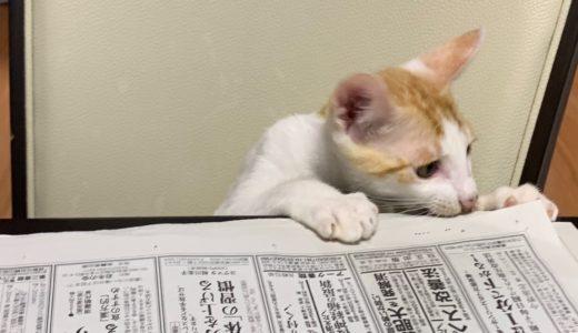 なんとビックリ!!新聞を読むねこ♬