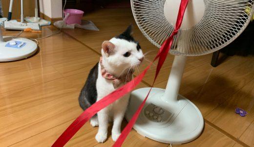 お遊び大好き猫 実は遊びたくてたまらなかった!!