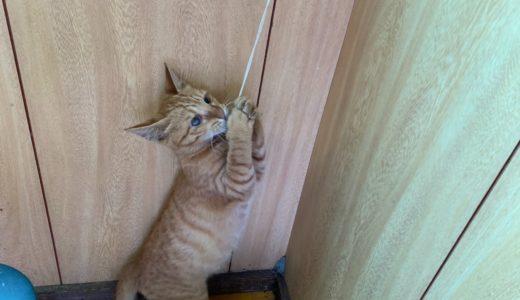 職場の子猫ちゃん